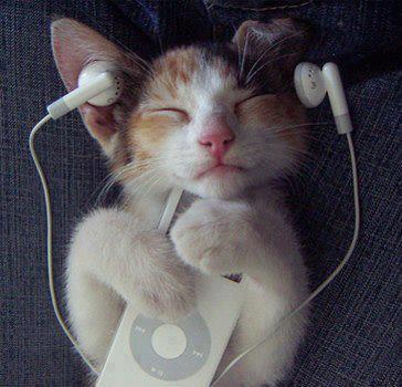 cat-listening-to-music