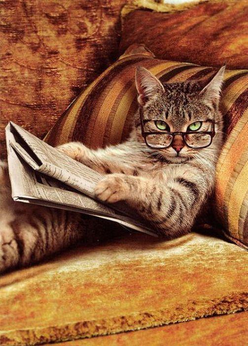 cat-reading-paper