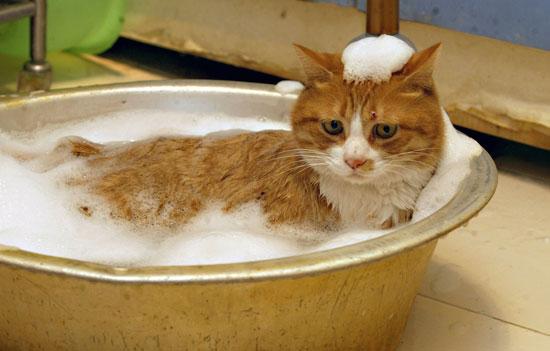 cat_bath