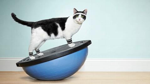 ht_cat_workout_ll_130429_wblog